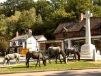 Burley, situated wthin the New Forest  where ponies roam freely.