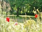 Explore the natural wildlife garden.
