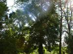 Trees of the parc
