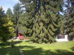 Large secluded garden featuring a tall pine tree over 100 years old.