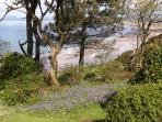 A view of the beach through trees in the front garden.