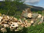 Dry hardwood logs being harvested for your unlimited use
