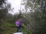 Olive beating