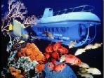 Go to the bottom of the sea for shipwrecks and sea life