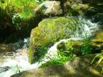 The stream in Lamorna woods just down the lane from your Studio