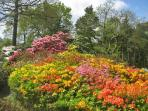 Lea Gardens noted for azalea and rhododendrons