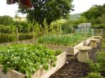 Vegetable patch and fruit trees for a complimentary meal