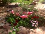 Genuine New Mexican garden flamingos! :)