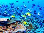 Snorkel in Cozumel