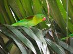 Beautiful parakeets come to visit every evening at sunset.