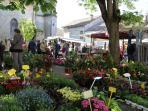 Springtime flower market in the village