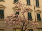 The spring is wonderful in Lucca!