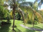 Garden with coconut trees