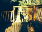 Guests took a picture of their dog Jet enjoying the dog safe deck