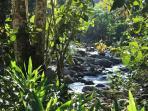 Finca Pura Vida: Rio Armado