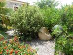 il mio ginepro nella porzione posteriore del giardino