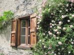 rosier devant la maison