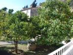 Garden with orange and lemon trees