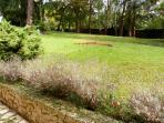 jardin avec fleurs et lavande