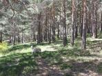 Mágico bosque frente a la casa. Salir de la cama y poder caminar entre pinos :)