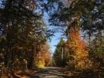 Leafy lane