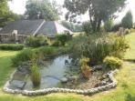 One of the garden ponds, with a wonderful array of flora and fauna, always an abundance of dragon fl