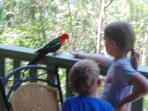 Kids enjoy the king parrots and rosellas.  Adults love them.