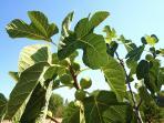 I frutti della terra per tutte le stagioni