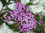 Mountain Flowers spring/summer