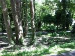Pretty woodland setting
