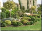 External gardens around complex