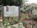 Chemin des Rosiers 60mins:Doue La Fountaine-Centre for rose growers & Garden of 100s of rose species