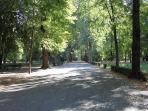 Cascine inner trail - perfect for jogging or biking