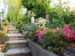 Steps up from sunny patio into pretty lawned garden