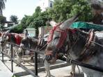 Donkey rides in the whitewashed village of Mijas.