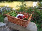 Produce from Millepetit's market gardener