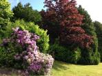 Shrubs and Bushes in the Grounds
