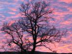 Evening sky at Cossarshill Farm & Elspinhope Cottage