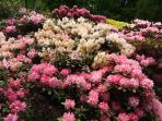 des allées fleuries et entretenues