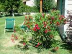 Farniente : chaise longue et laurier rose de Provence