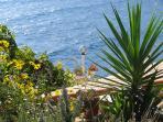 Some plants, croatia apartment rentals