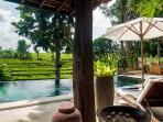 Outdoor Pool and lounge area - overlooking rice field terrace