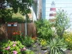 butterfly garden in yard