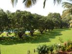 Mango trees around the pool
