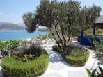 Lovely Mediterranean garden