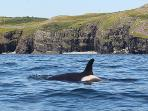 Whale watching is abundant in Trinity in particular. These social creatures often show off!