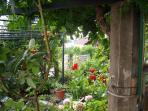 garden, just a piece of it