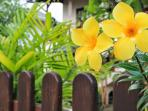 Flower on garden fence