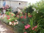 Flowers in LYS's front garden