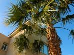 Palm Tree at Entrance